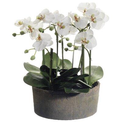Phalaenopsis Orchid Floral Arrangements Clay Pot 1593 Product Picture